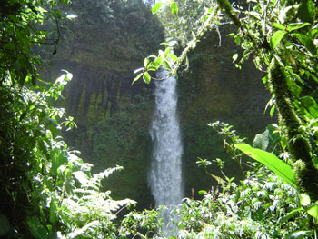 Cascade in the Jungle