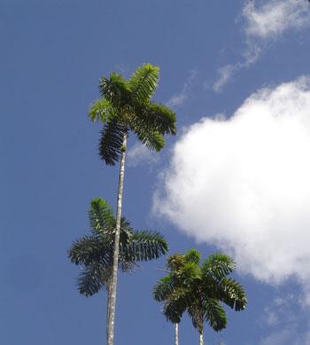 Oriente del Ecuador