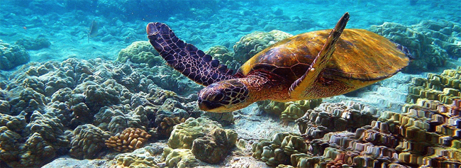 Galapagos Diving Tours